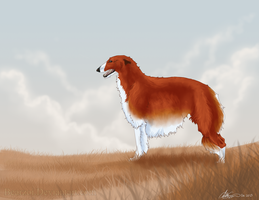 Borzoi - Bear by Bearzoi