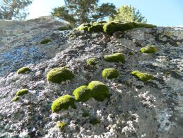Moss on a rock by algreat