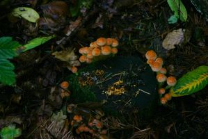 Fairy Ring by Indiliel