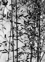 Black and White Bamboo by RachelDS