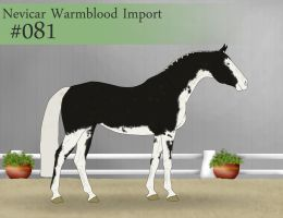 Import  81 by SweetStreamStables