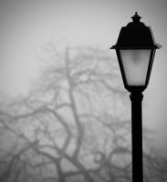 Lamp and Tree. by kpavlis