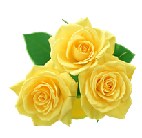 yellow roses PNG by Melissa-tm