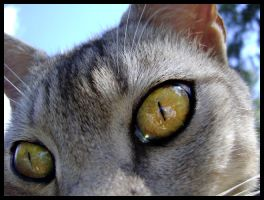 Lily's Eye. by Sylviaizzle