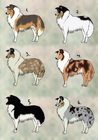 Rough Collie adoptables :TAKEN: by Kultapossu