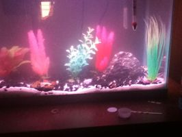 my 14 gallon fish tank by plusewolf