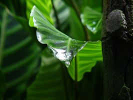Dew Drop by shanahben