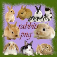 rabbits PNG by roula33