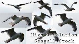 Seagull stock 8 pictures by Gamekiller48
