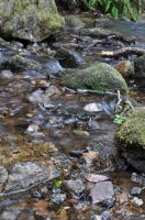 Blurred Water Test 3 by rayrussell2000uk