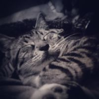 Catnap by tattooed-psychosis