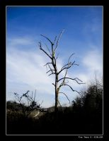 The Tree V - COLOR by ackeibler