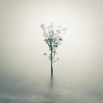 Little tree on water by correiae