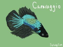 Betta Fish: Caravaggio (SIP) by myexplodingcat