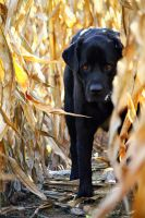 Who's That In The Cornfield? by pasofino6