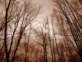 Branches Trees by InSaNeDrEaMeR2187