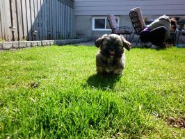 Run Puppy Run by Veronyak
