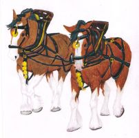Clydesdale horses by Tallonis