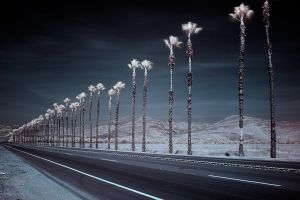 white palm row by doverby