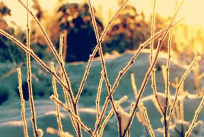 winter 2 by QualityCoffeeBean