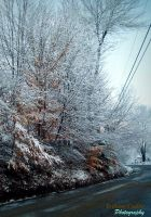 Icey Trees by LostAtSeaForever