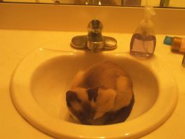 Kitty In The Sink by Krusifix666