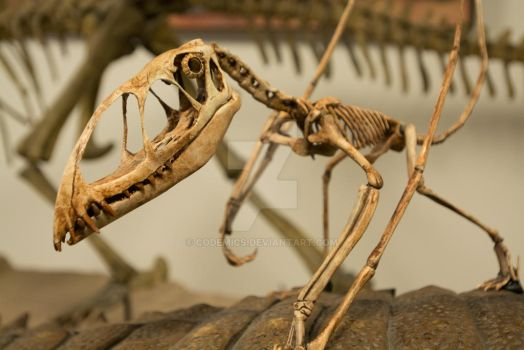 Dinosaur Skeleton by codemics