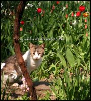 745 by evy-and-cats