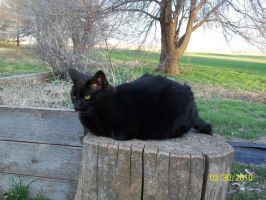 Black Furball by TheTweedleTwins