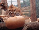 Tigers at Play by AliasBurn