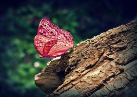 Butterfly by agolam