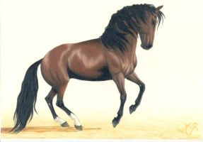 Brown Andalusian by LindaColijn