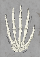 Bones of the Human Hand by Sarahorsomeone