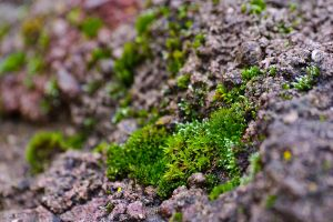 Micro Forest by ValdesBG