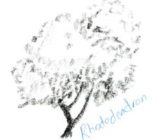 Tree Study Rhododendron not Blooming by damekage