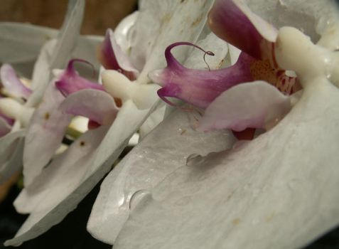 Orchid Train by BloodiedGypsy