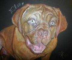 Dogue De Bordeaux by xxx-ellie