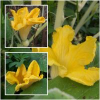 Pumpkins To Be by EuchredEuthanasia