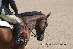Quarter Horse Stock 73 by tragedyseen