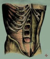 TORSO coloured by red20