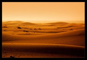 Golden Sand Dunes by itash