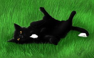 Ravenpaw by ivy-kitty