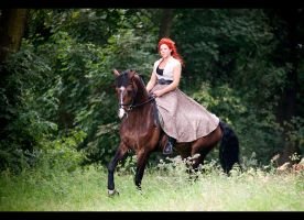 Horse Bogumil 9 by paula2206-photo