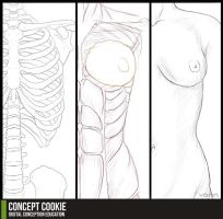 Anatomy Resource: Female Upper Body by ConceptCookie