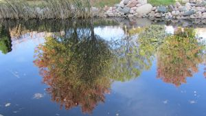 .Fall Colors in Water. by decayedroses