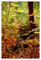 Autumn in Algonquin by 3hika