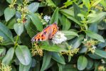Butterfly 64 by Pagan-Stock