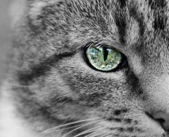 Cat eye III by sisselPhotography