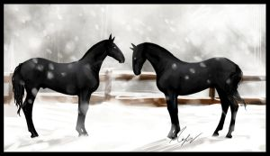 Andalusian colts by Percyvelle