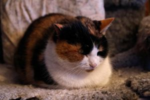 Emma The Cat 1 by Perzec